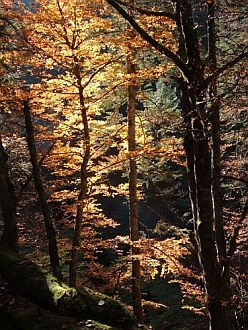 autumn is a beautiful season in the Pyrenees